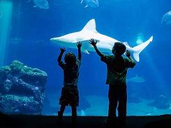 maui-ocean-center-Kids-petting-shark.jpg