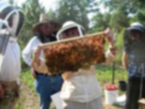 Open hive demonstration.jpg