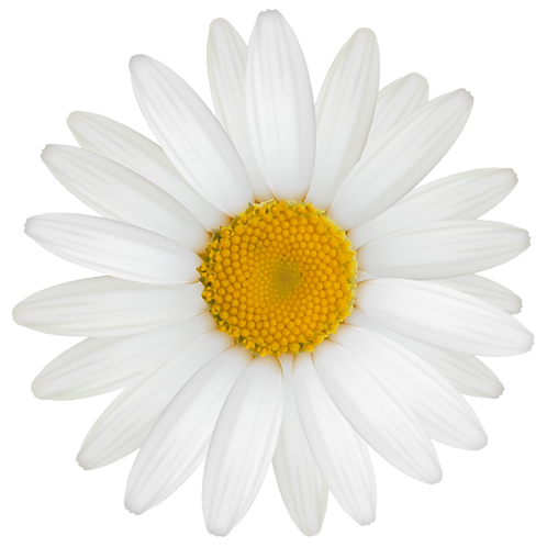 Daisy - Reed Diffuser Refill Oil