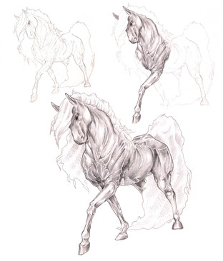 Horse muscle study