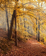 autumn-forest-4561344_1920.jpg