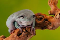 Smiling Frog.jpg