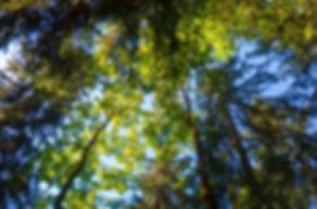 trees-4030240_1920.jpg