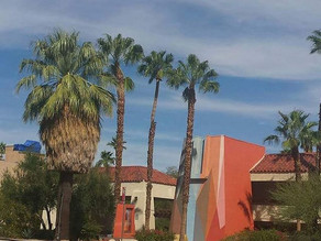 Visit Palm Springs During Modernism Fall Preview Week