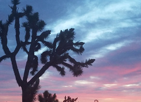 Prepare for a Day Trip to Joshua Tree National Park from Palm Springs