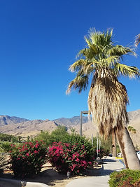 View at Indian Canyon Golf Resort