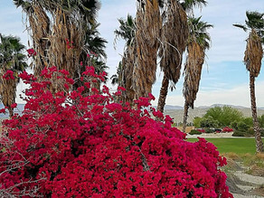 5 Scenic Locations to Photograph in Palm Springs