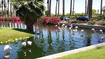 JW Marriot - Flamingos Greet You