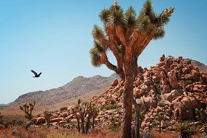 History and Mystique of Giant Rock Near Joshua Tree