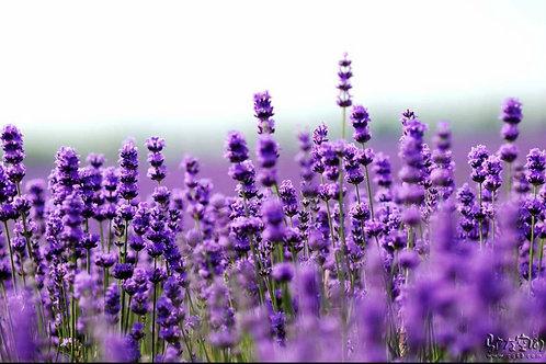Lavender Herbal Bath Tab