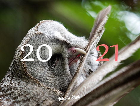 kalendar 2021.jpg