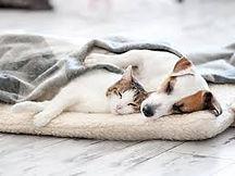 dog with cat2.jpg