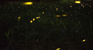 green-leafed%20plant_edited.jpg