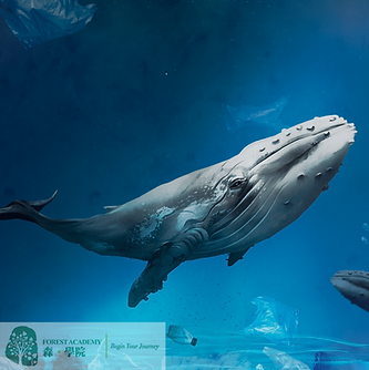 海洋保育企業責任計劃方案-min.png