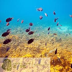 STEM 興趣班, 海洋生態教育課程, FOREST ACADEMY 森· 學院 STEM 教育課程 -image22