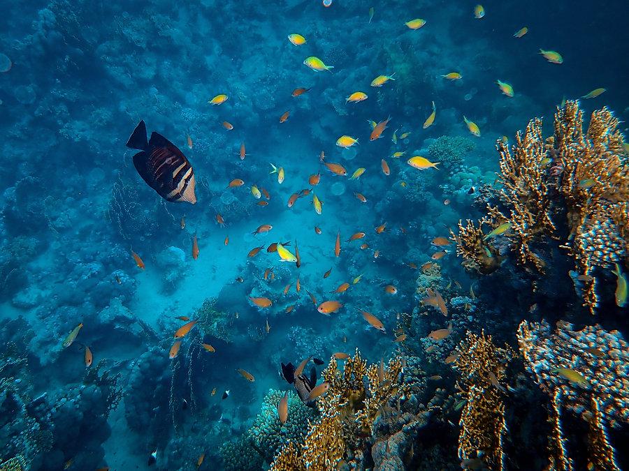 STEM 興趣班, 海洋生態教育課程, FOREST ACADEMY 森· 學院 STEM 教育課程 -banner01