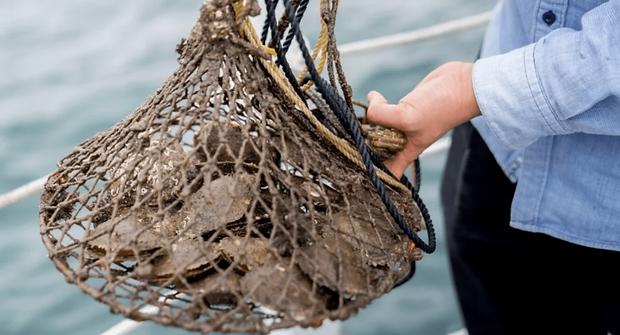 STEM 興趣班, 海洋生態教育課程, FOREST ACADEMY 森· 學院 STEM 教育課程 -image14
