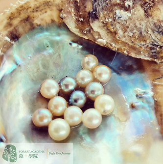 珍珠淨海環保教育企業責任計劃方案-min.png