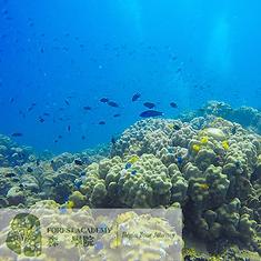 STEM 興趣班, 海洋生態教育課程, FOREST ACADEMY 森· 學院 STEM 教育課程 -image21