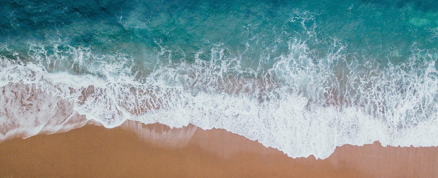 海洋保育,海洋教育 Forest Academy-image01