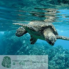 STEM 興趣班, 海洋生態教育課程, FOREST ACADEMY 森· 學院 STEM 教育課程 -image23