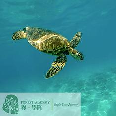 STEM 興趣班, 海洋生態教育課程, FOREST ACADEMY 森· 學院 STEM 教育課程 -image20