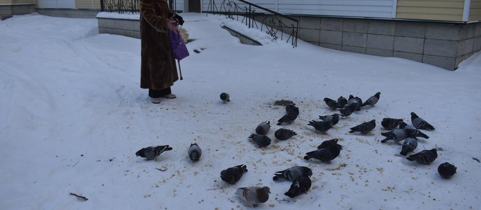 """Акция """"Покорми птиц"""""""