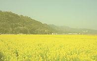 黄色加工.jpg
