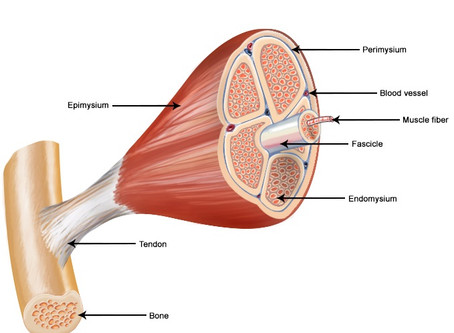 What is Myofascial Release?