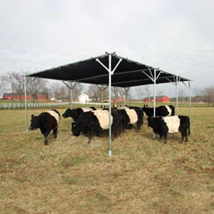 cattle 1.jpg