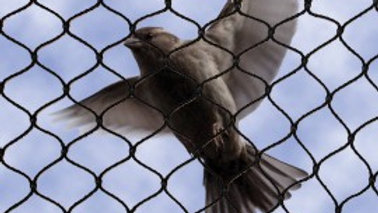 """NETTEXX BIRD NETTING 1"""" MESH   (click to choose different sizes)"""