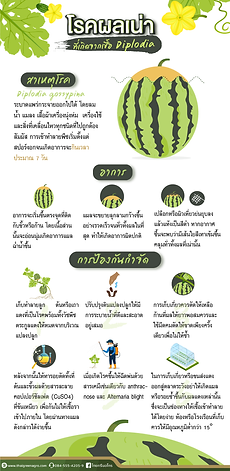 thaigreen.png
