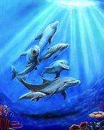 0066_DolphinPod_THUMB.jpg