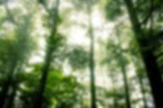 Foggy Forêt