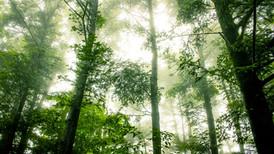 12 Hábitos saludables para cuidar el planeta.
