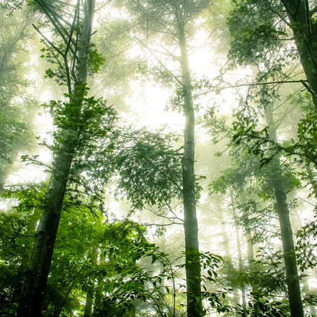What are Carbon Offsets and What Do They Mean For You?