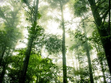 «Небо и земля» и другие события экофеста