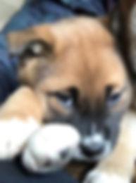 lead_puppy.jpg
