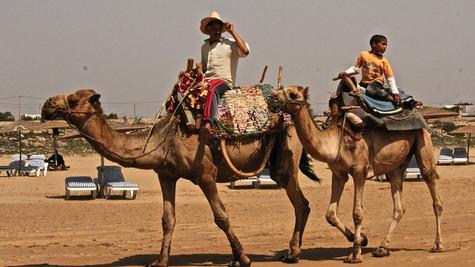 ESSAOUIRA CAMEL RIDERS #1