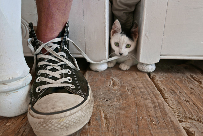 KITTY NIBBLES CONVERSE LACES