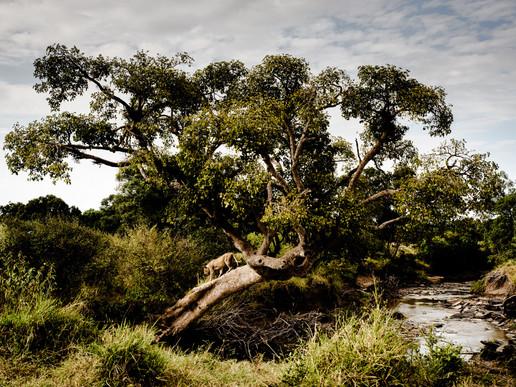 [Photography/Wildlife] William Fortescue
