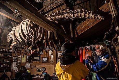 Скелет стеллеровой коровы у Сергея Пасенюка