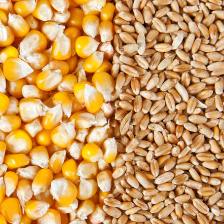 """""""USDA Grain: World Markets and Trade (May 12): Record Corn, Wheat Production Seen in 2021-22"""""""