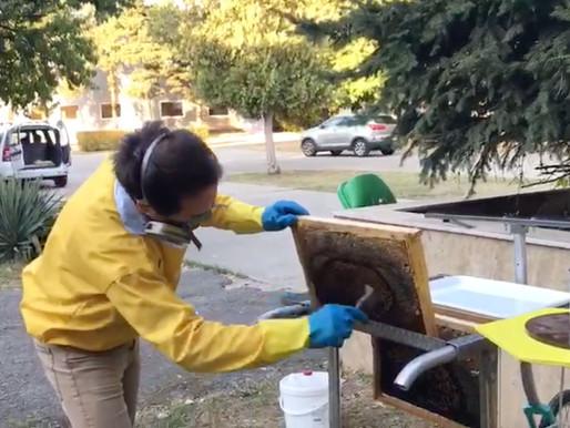 Nouveau traitement contre le varroa