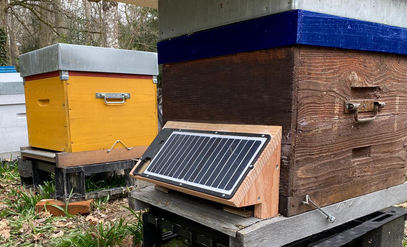porte bois sur ruche.jpg