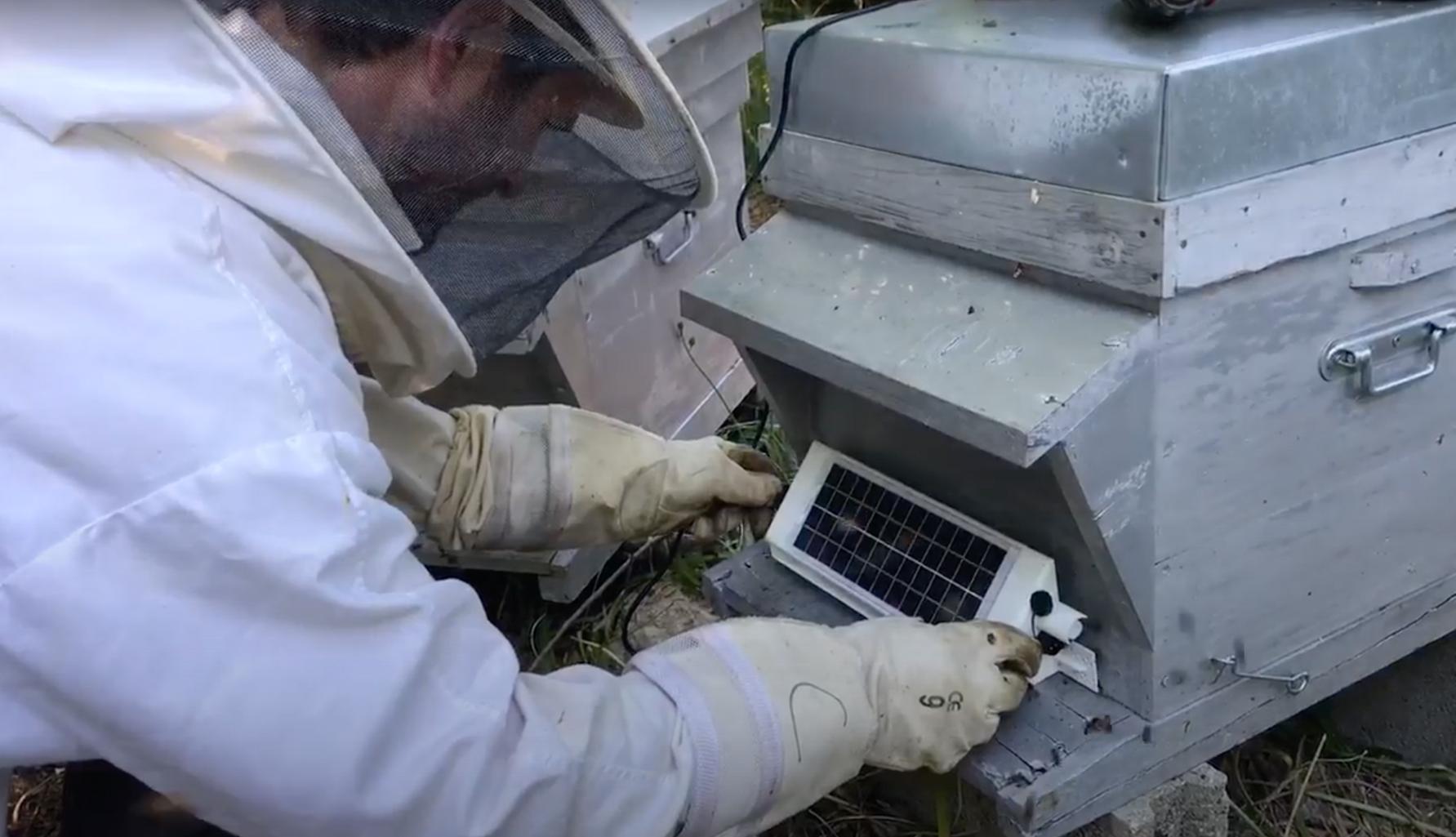 Installation porte de ruche connectée