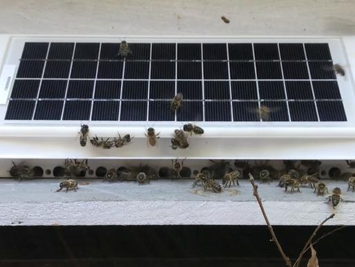 La porte de ruche connectée DROMPY