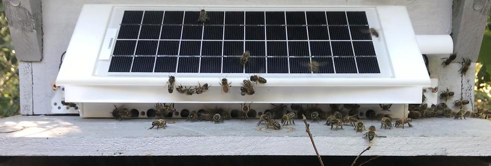 Porte de ruche connectée