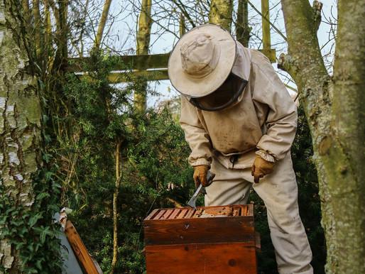 #COVID-19  Est ce que je peux m'occuper de mes ruches pendant le confinement ?
