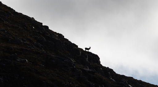 Stag Posing on the Mountain